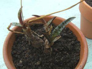 leafy bulbs in a pot