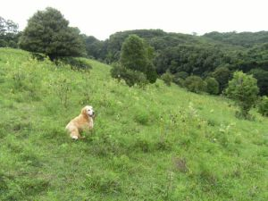 dog on a hillside among weeds