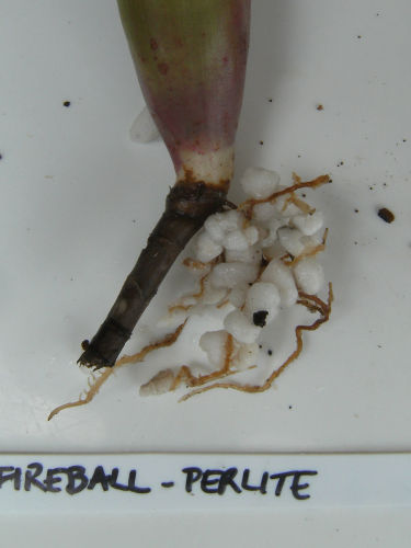 closeup of plant roots