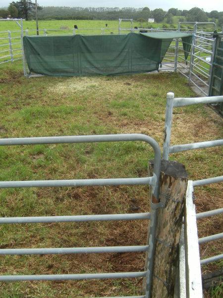 metal fences around a cattle yard